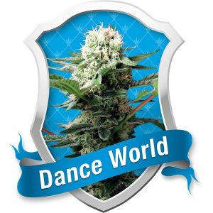 Royal Queen Seeds Dance World