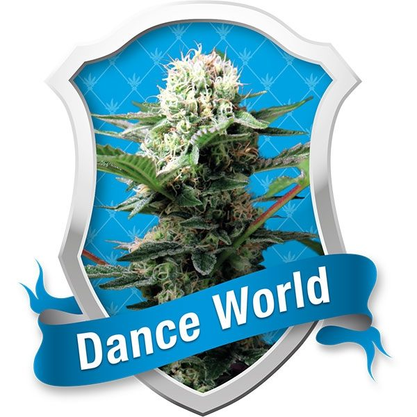 Royal Queen Seeds Dance World